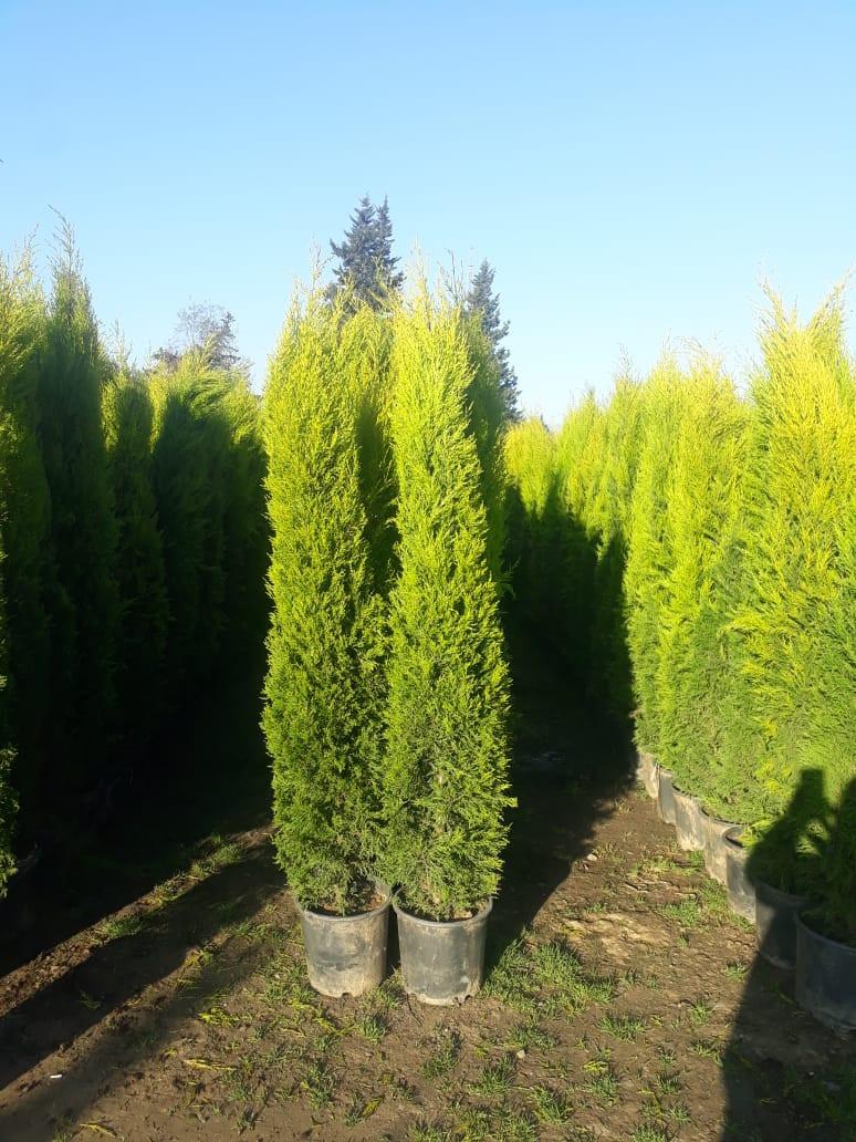Ağaclar şəkil